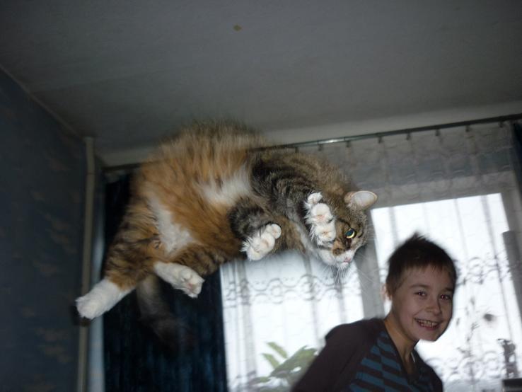 Lidojošie kaķi SvIESTA-K